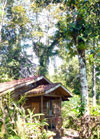 This 10-acre incomplete eco-tourism development has 3 enchanting rustic but modern cabins surrounded by wildlife rich jungle and with Lake Arenal views.