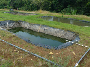 Producing Tilapia Farm With License For 55 Ponds Off Market